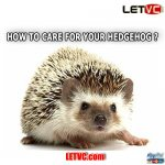 How to Care for Your Hedgehogs?
