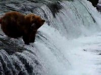 Brooks Falls Bears