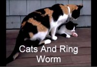 Tips To Extravagance Ringworm Virus In Your Pets