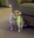 Have you ever seen a dog dance like this