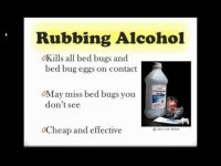 How to get rid of bed bugs? tutorial