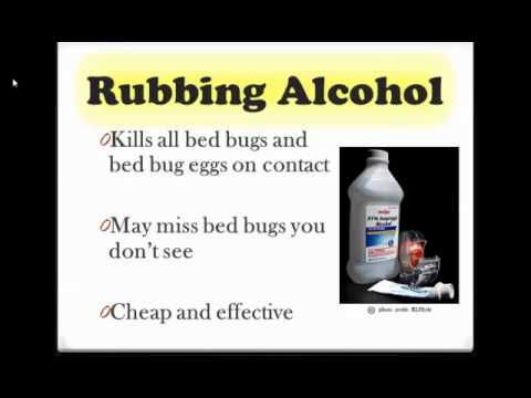 How To Get Rid Of Bed Bugs Tutorial