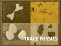 How fossils are formed? Educational
