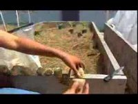 How to planting potatoes, agricultural video