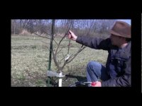 How to prune an apple tree? Tutorial