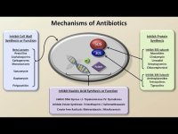 Mechanism and classification of antibiotics lecture 3