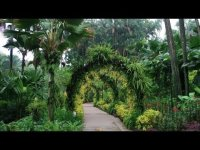 Visiting the Botanic Gardens in Singapore