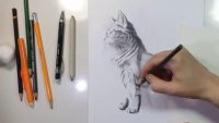 Draw a Beautiful Cat